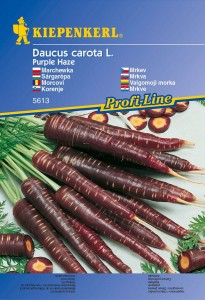 Carrot' Purple Haze' - Kiepenkerl